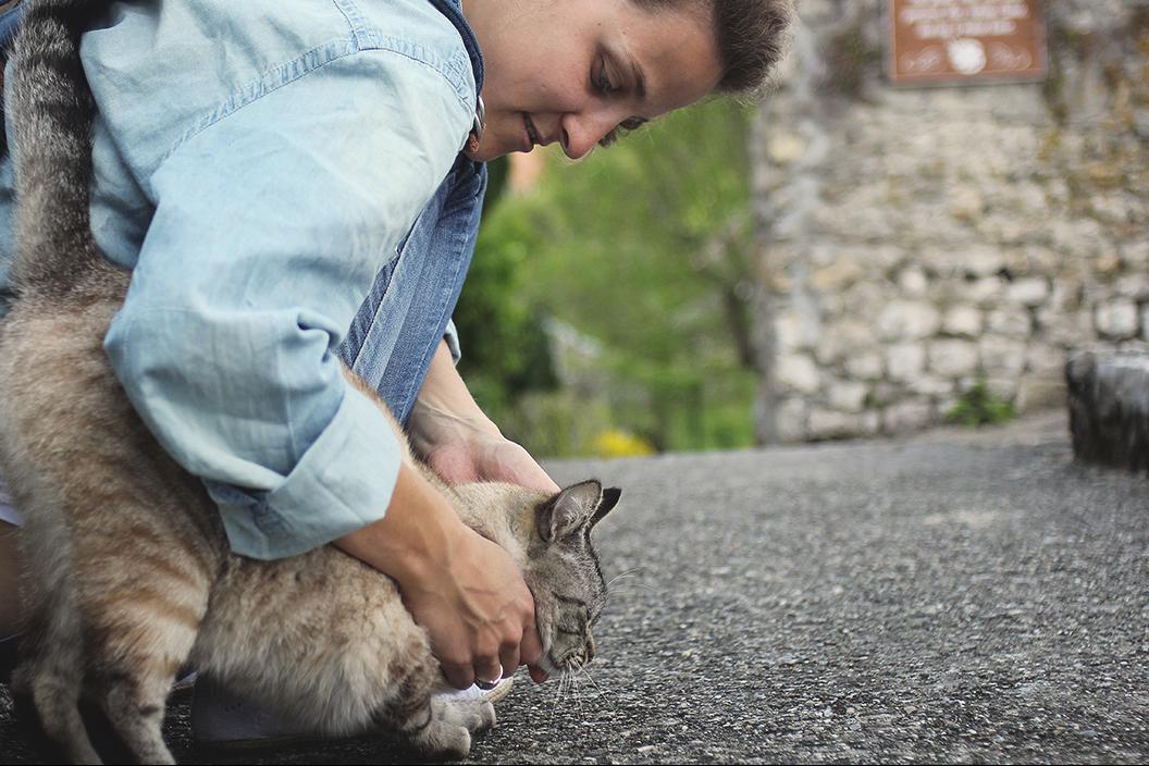 morestel kitty