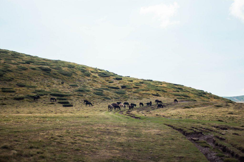 заслон Орлово Гнездо, Стара Планина
